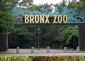 BronxZoo1