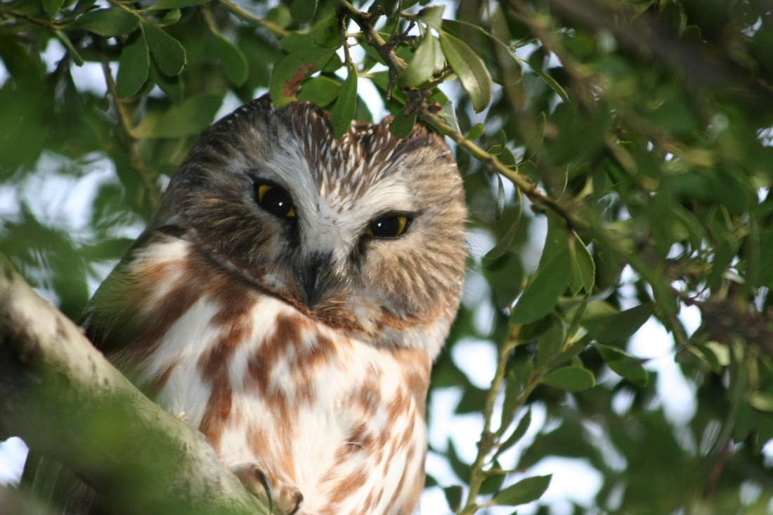 Owl Prowl at Bartow Pell Mansion Museum