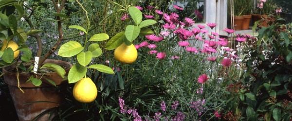 Lemon Day at Wave Hill