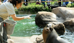 4j36667gnw_Julie_Larsen_Maher_1321_California_Sea_Lion_Show_with_trainer_SLP_BZ_09_13_10_hr