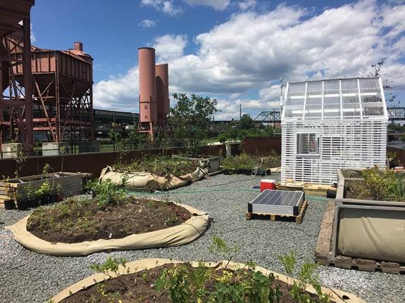 Visit the Floating Food Forest in the Bronx Before August 20th