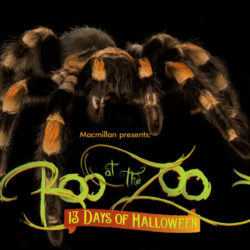 The Scoop On This Year's Boo at the Zoo