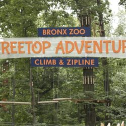 Treetop Adventure Opens at the Bronx Zoo