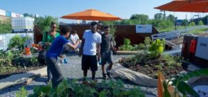 Swale: public floating food forest